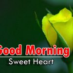 new nice rose good morning images photo forhd