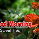 new nice rose good morning images pics for hd