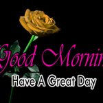 new nice rose good morning images pictures download