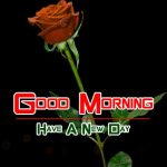 new rose Good Morning Images photo free download