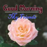 new rose Good Morning Images photo free hd