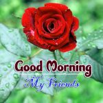 new rose Good Morning Images pictures photo for hd
