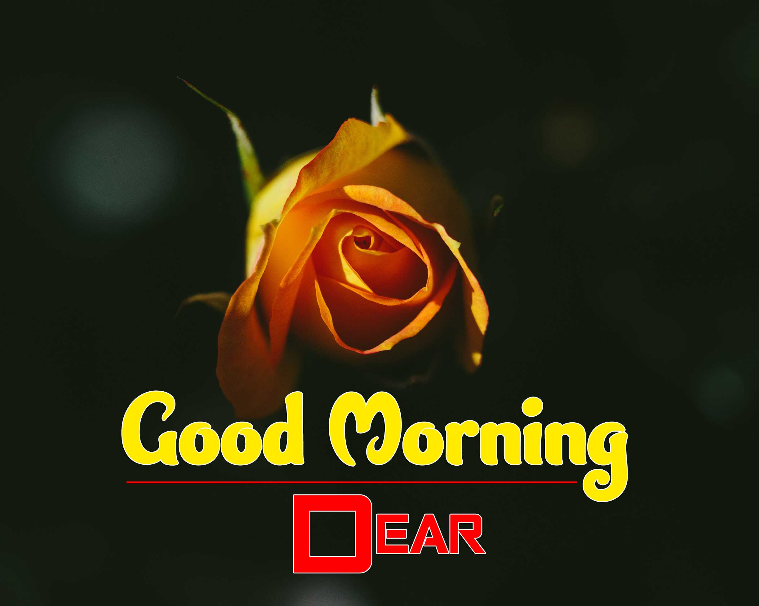 652+ Good Morning Images Pictures Pics Wallpaper For Her Download